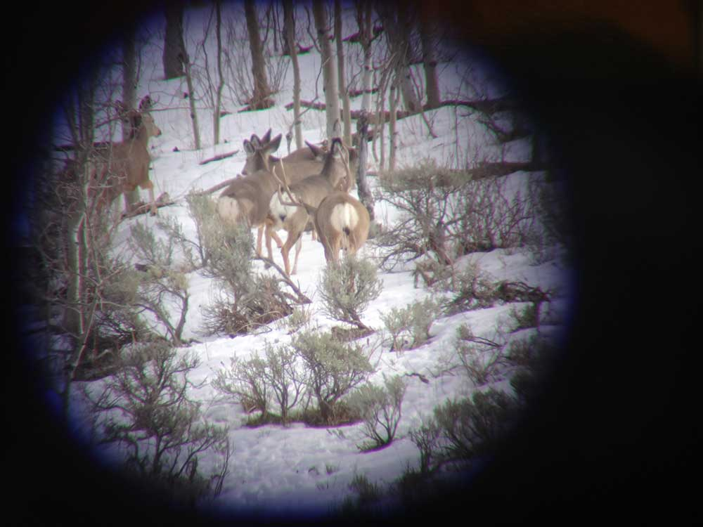 SCOPE, SCOUT, MULE DEER, WINTER
