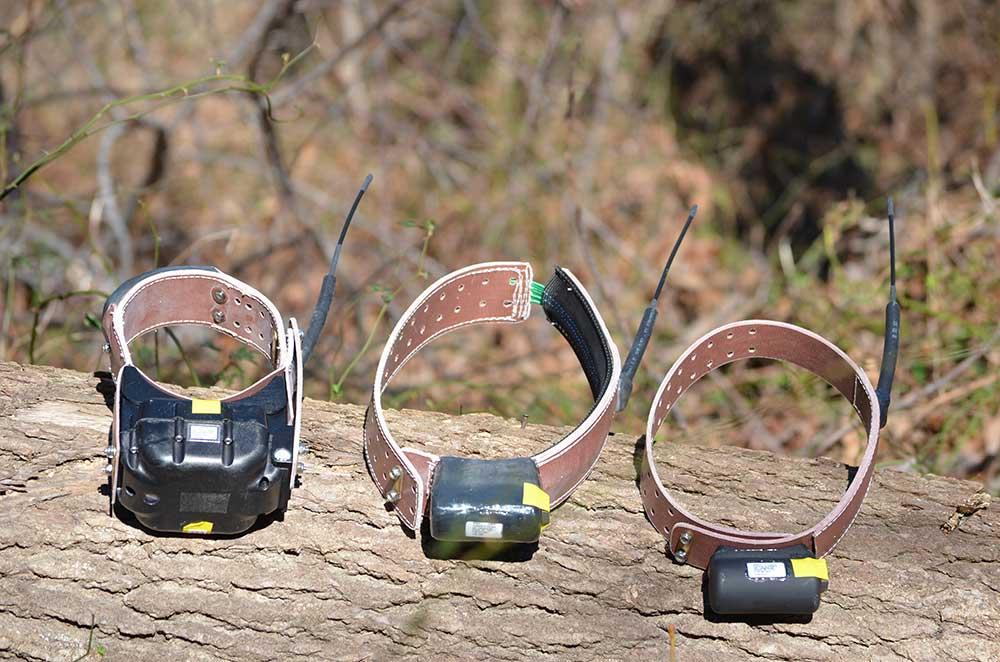 Radio collar