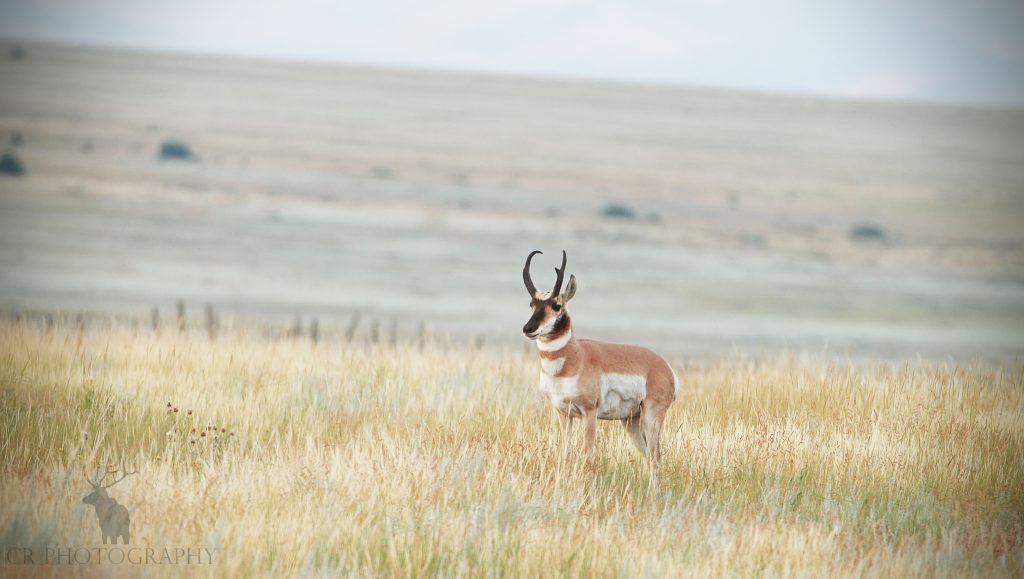 PRONGHORN PERSISTENCE