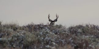 MAN FINED $41,000 FOR ILLEGALLY HUNTING IN COLORADO