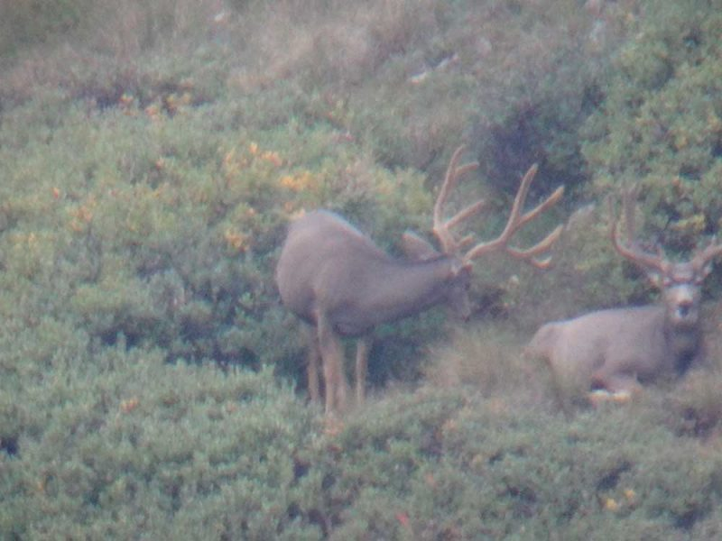 GLASSING, MULEYS, SPOTTER
