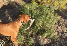 Finding Sheds with Dogs