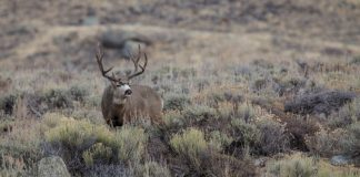 CWD ON THE VERGE OF ACCLERATED GROWTH IN NORTH DAKOTA
