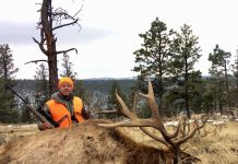 COLORADO BULL ELK HUNT