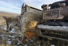 COYOTE HUNTING CONTESTS