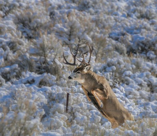 NEW GRANT FOR WYOMING WILDLIFE CROSSING PROJECT