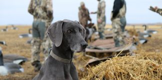 DOGS HELPING HUNTERS