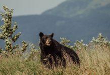 BE BEAR AWARE IN ARIZONA