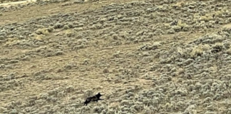 COLORADO HUNTER FILMS NEW WOLF PACK