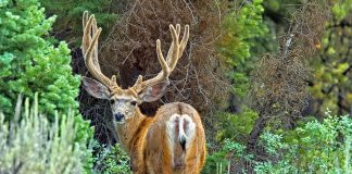 MAN CONVICTED OF POACHING IN COLORADO