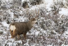 New Cases of Chronic Wasting Disease in Montana