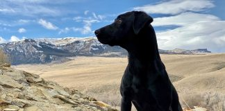 Top 10 Hunting Dogs