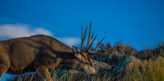 NORTH DAKOTA FIGHTING CWD