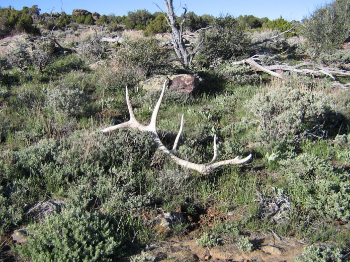 AREAS CLOSED TO SHED HUNTING