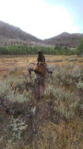 elk walk away
