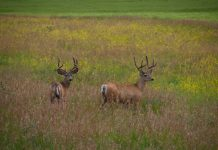 UTAH DWR PROPOSES DEER TAG REDUCTIONS