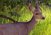 WYOMING MULE DEER TRACKING EXPANDS