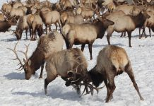 HUNTING IN THE NATIONAL ELK REFUGE?