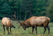 RMEF & PARTNERS GRANT NEARLY $300K TO NEVADA