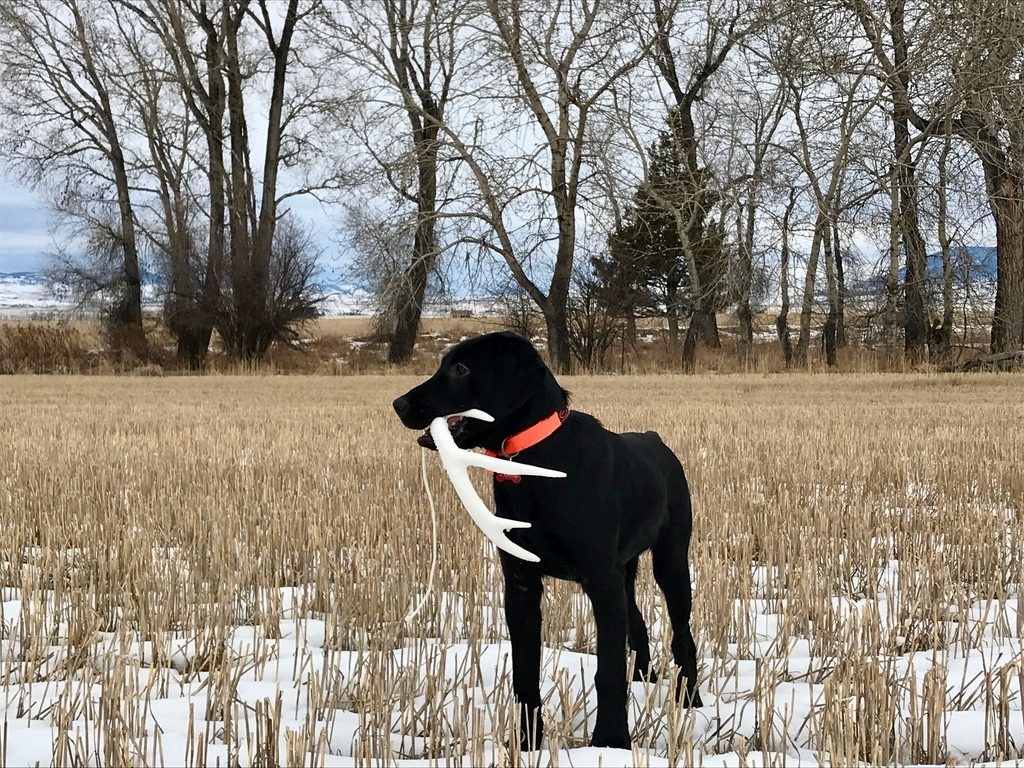 TRAIN YOUR HUNTING DOG