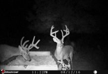 YEAR WITHOUT TRAIL CAMS
