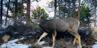 IDAHO TO REDUCE HUNTING OPPORTUNITIES