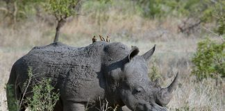 Africa's Wildlife Conservation Dilemma