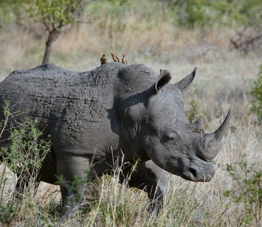 Africa's Wildlife Conservation Dilemma