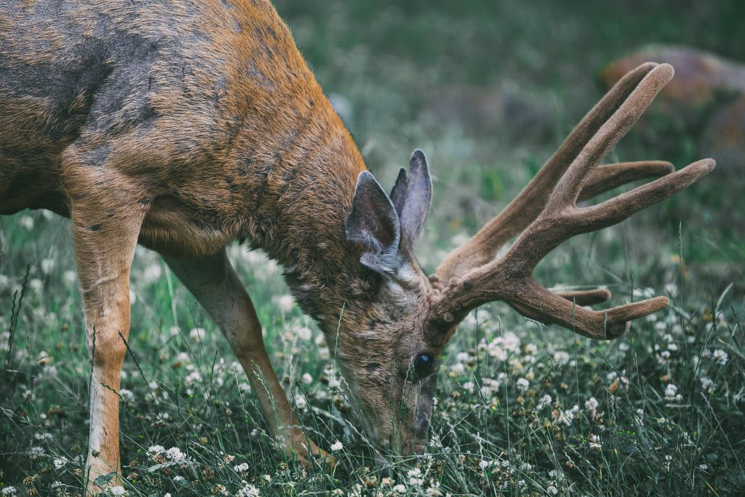 WYOMING JOINS WILD GAME CAMPAIGN