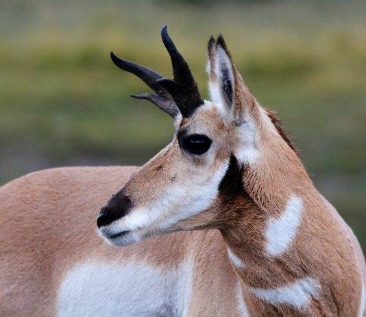 UTAH ELK AND PRONGHORN PERMIT PROPOSALS