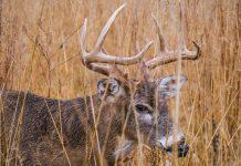 DENYING HUNTING LICENSES FOR ANIMAL ABUSE