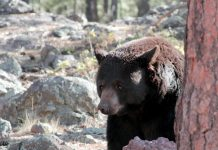 BEAR INCIDENTS IN UTAH ALMOST DOUBLED SINCE 2018