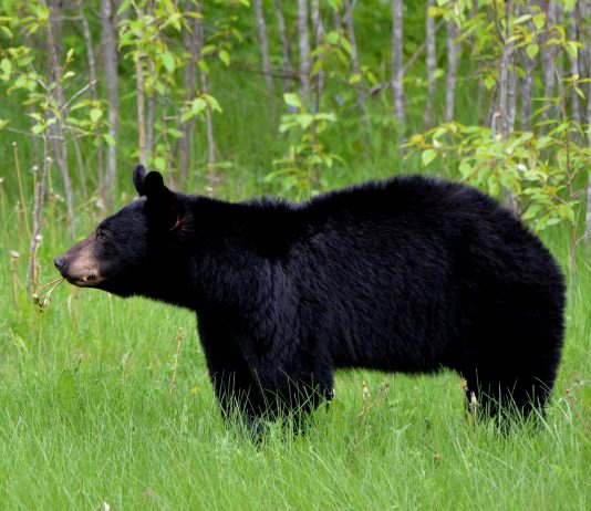 WASHINGTON BEAR SEASON CHANGES