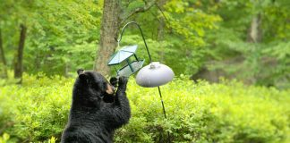 CHARGES FILED KILLING INTRUDING BEAR
