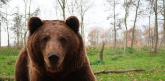 GRIZZLY TERRITORY EXPANDS AMID COURT BATTLES