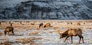 NEW HUNTING REGULATIONS COMING TO WYOMING