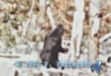 "OKLAHOMA PROPOSES A BIGFOOT ""HUNTING"" BILL"
