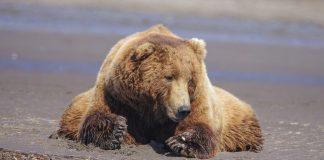 MONTANA WOMEN KILLED IN A FATAL BEAR ATTACK