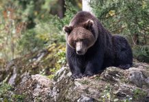 LAWSUIT STOP BEAR BAITING