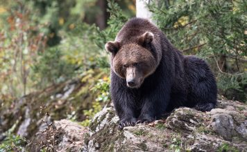 LAWSUIT STOP BEAR BAITING