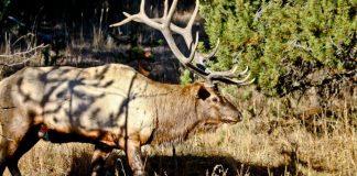 3.1 million hunting trips