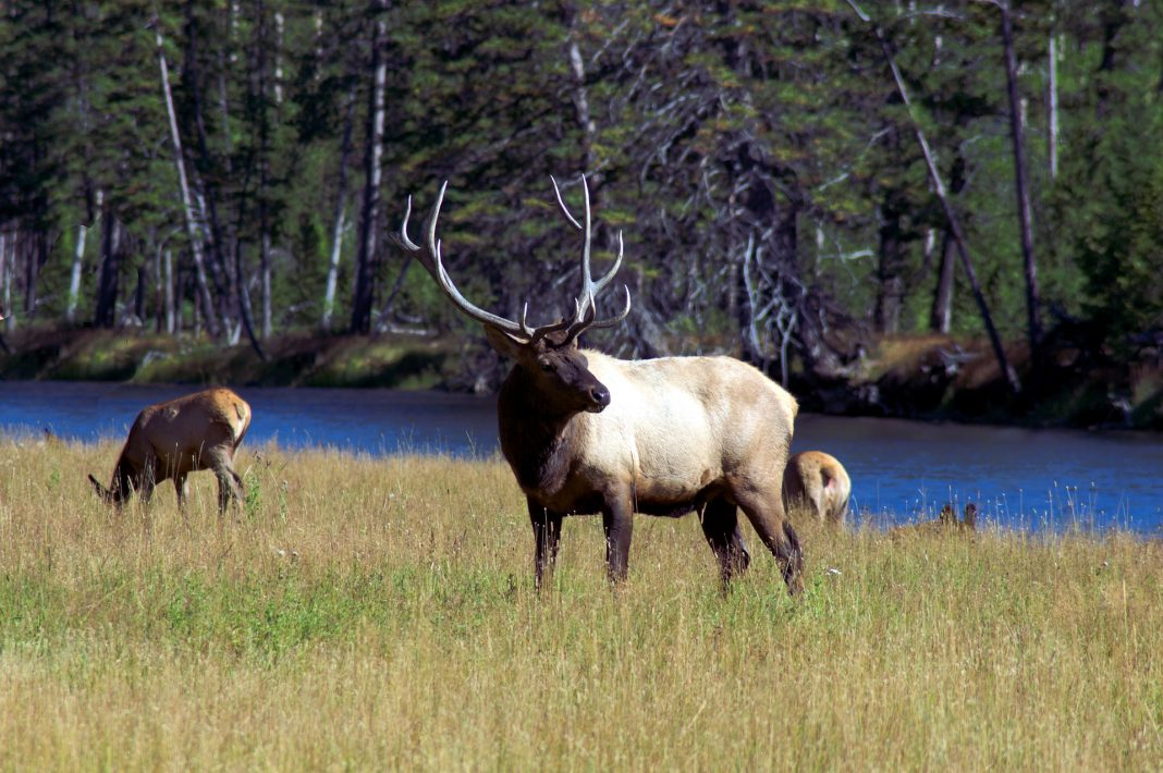 Hunting Wyoming