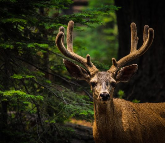 NEW WYOMING CWD PLAN SEEKS APPROVAL