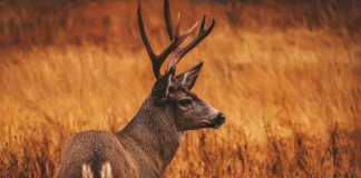 OKLAHOMA SEEKS PUBLIC INPUT ON CHANGES TO WILDLIFE RULES