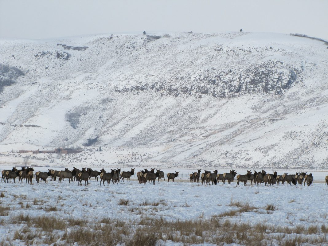 IDAHO FISH AND GAME TRAPS SIXTEEN ELK