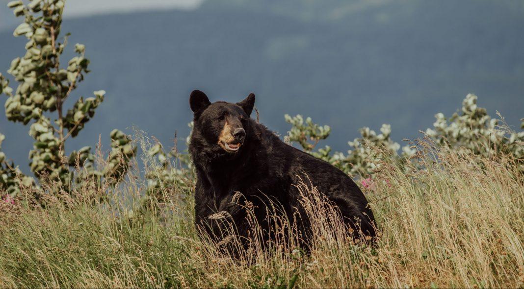 COLORADO WOMAN KILLED IN BEAR ATTACK