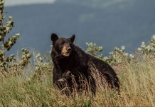 COLORADO WOMAN KILLED IN BEAR ATTACK