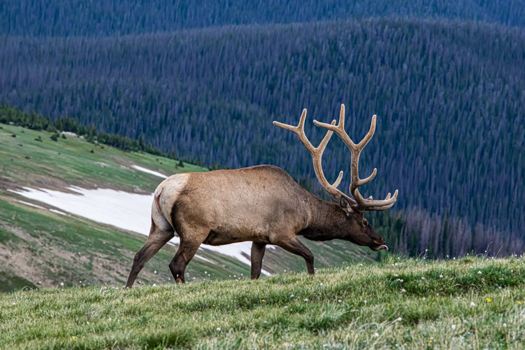 SIX MEN PLEAD GULITY IN IDAHO POACHING CASE