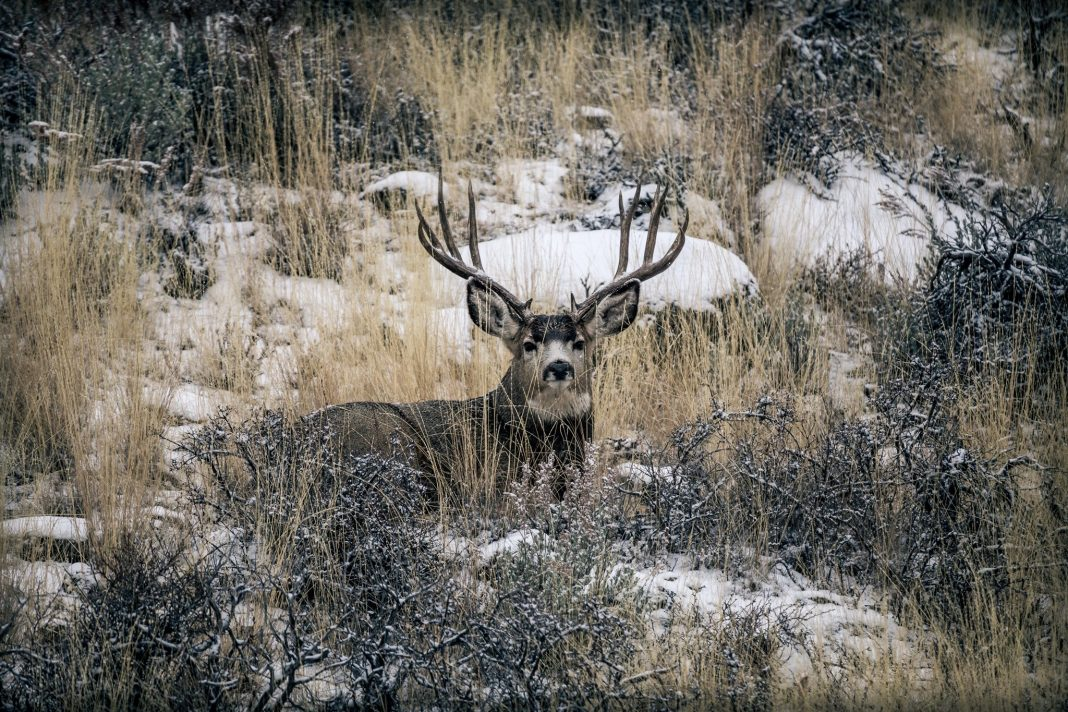 UTAH PROPOSES NEW MULE DEER MANAGEMENT PLAN