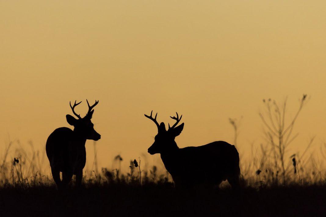 The Bowmars Are The Latest Defendants In Nebraska Poaching Case